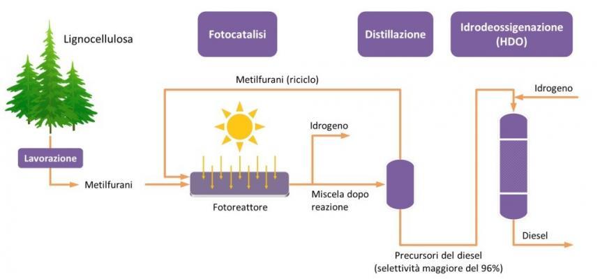 schema biomasse