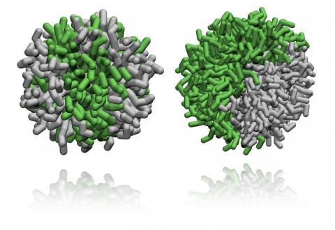immagine nanomolecole