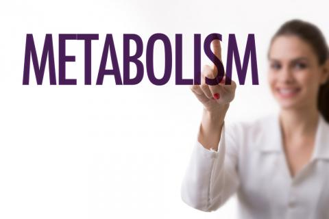 metabolismo lipidico phd top stories