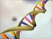 Endoxa genoma img