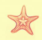 Stella marina Ctenodiscus crispatus img